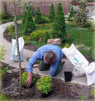 Где и как сажать в саду